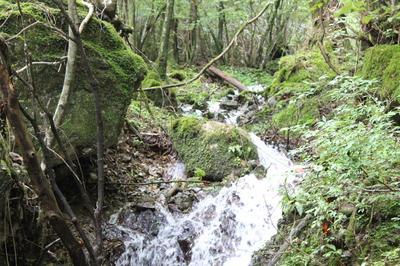 五木村を流れる水